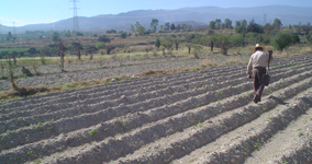 Trabajo de Campo en San Juan Tezontla